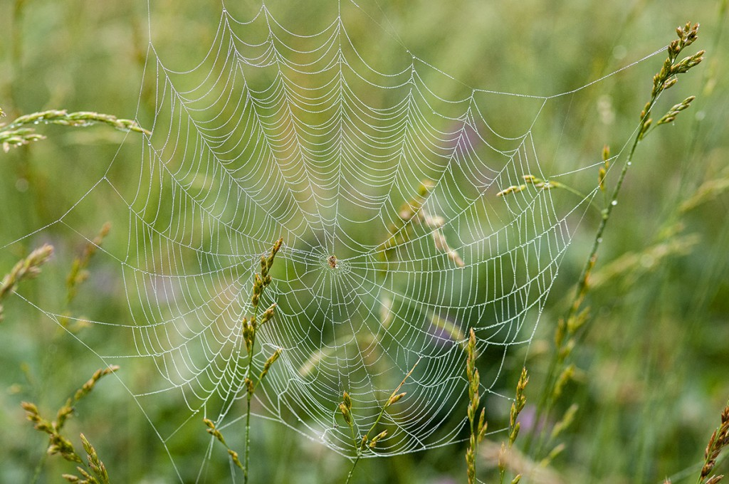 A dew covered spider web in Cades Cove
