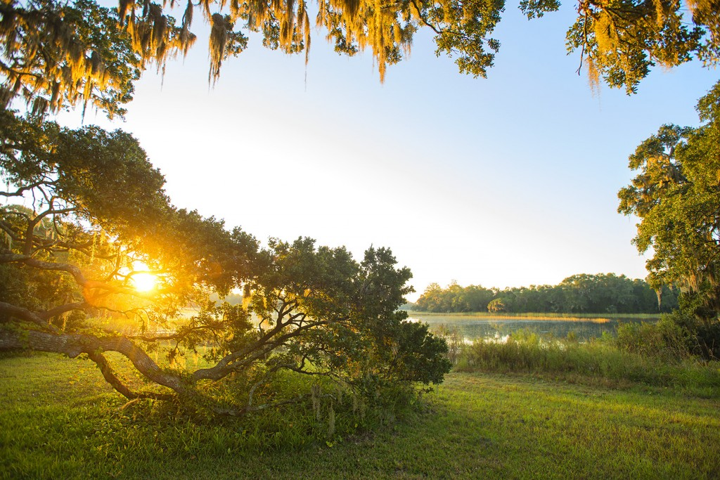 Centuries old live oaks lit up at sunrise